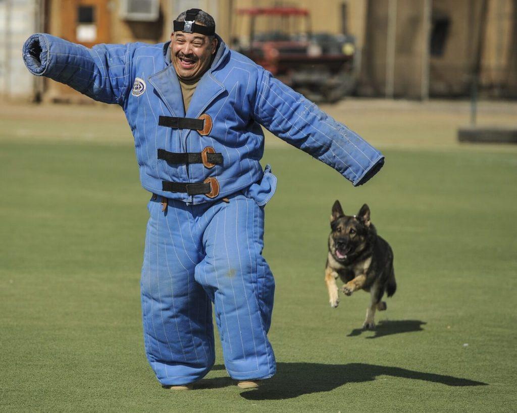 Zapojte psa do sportovních a výcvikových sdružení