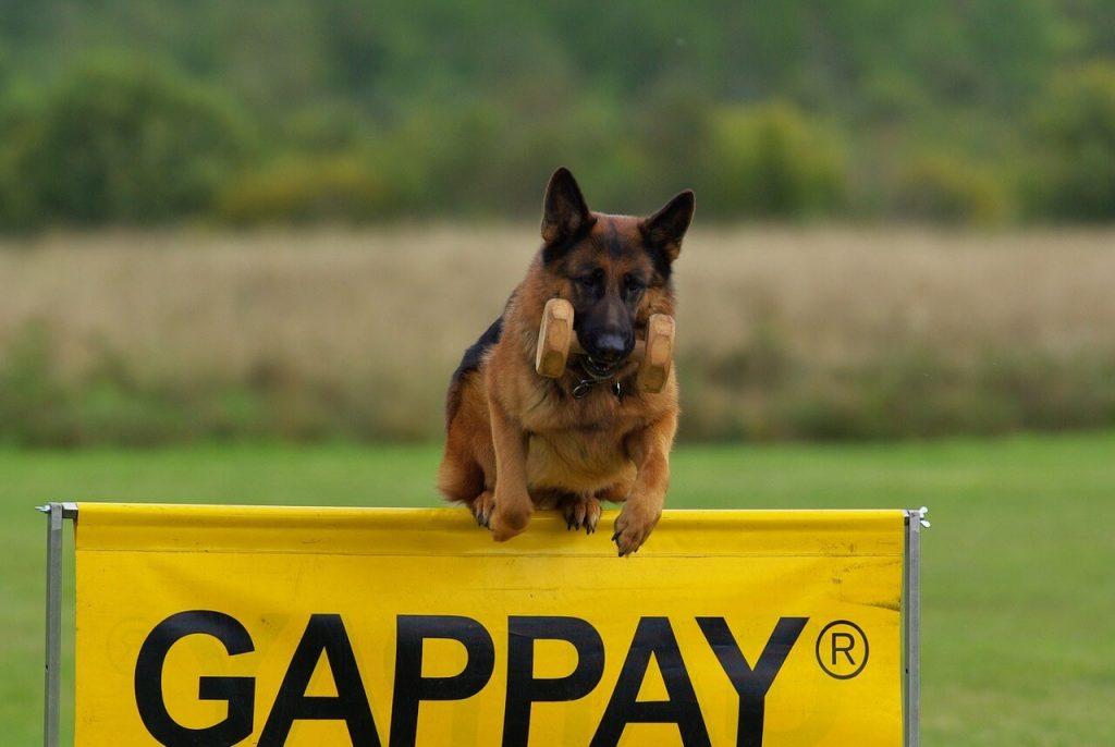 Pes bude nadšený z pravidelného sportu