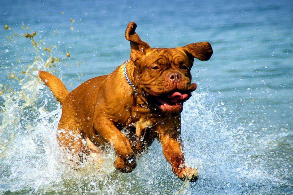 Pes v moři