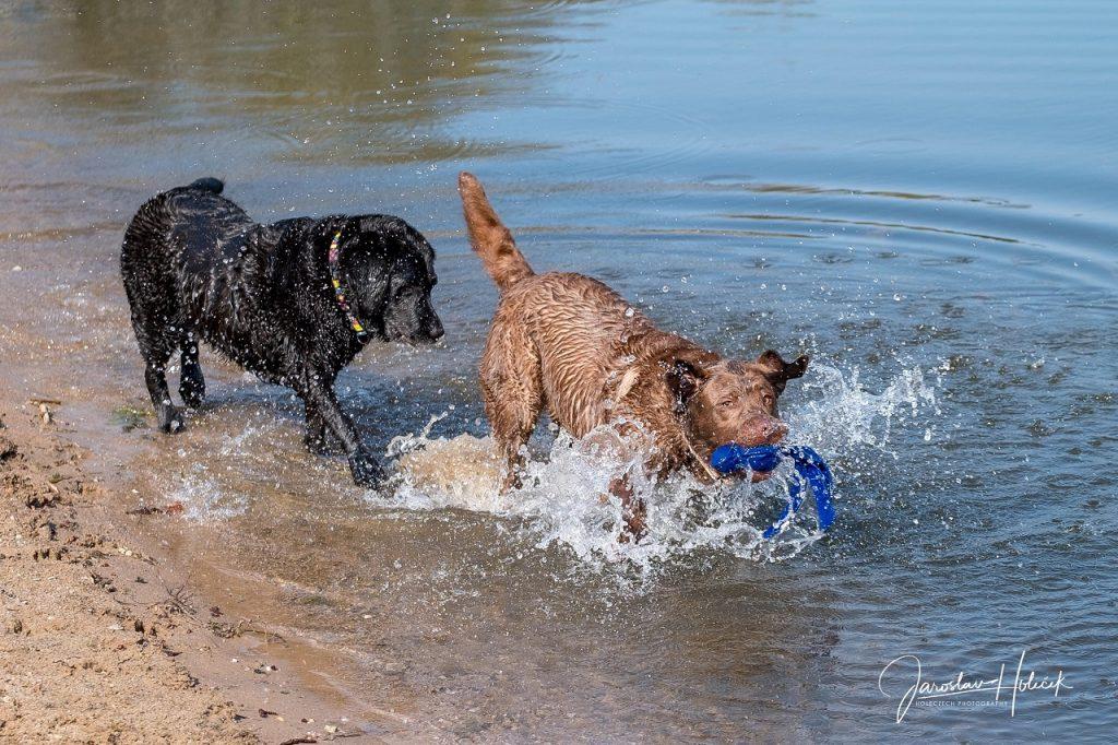 Psi v pohybu