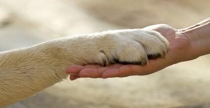 Jak naučit psa povelům