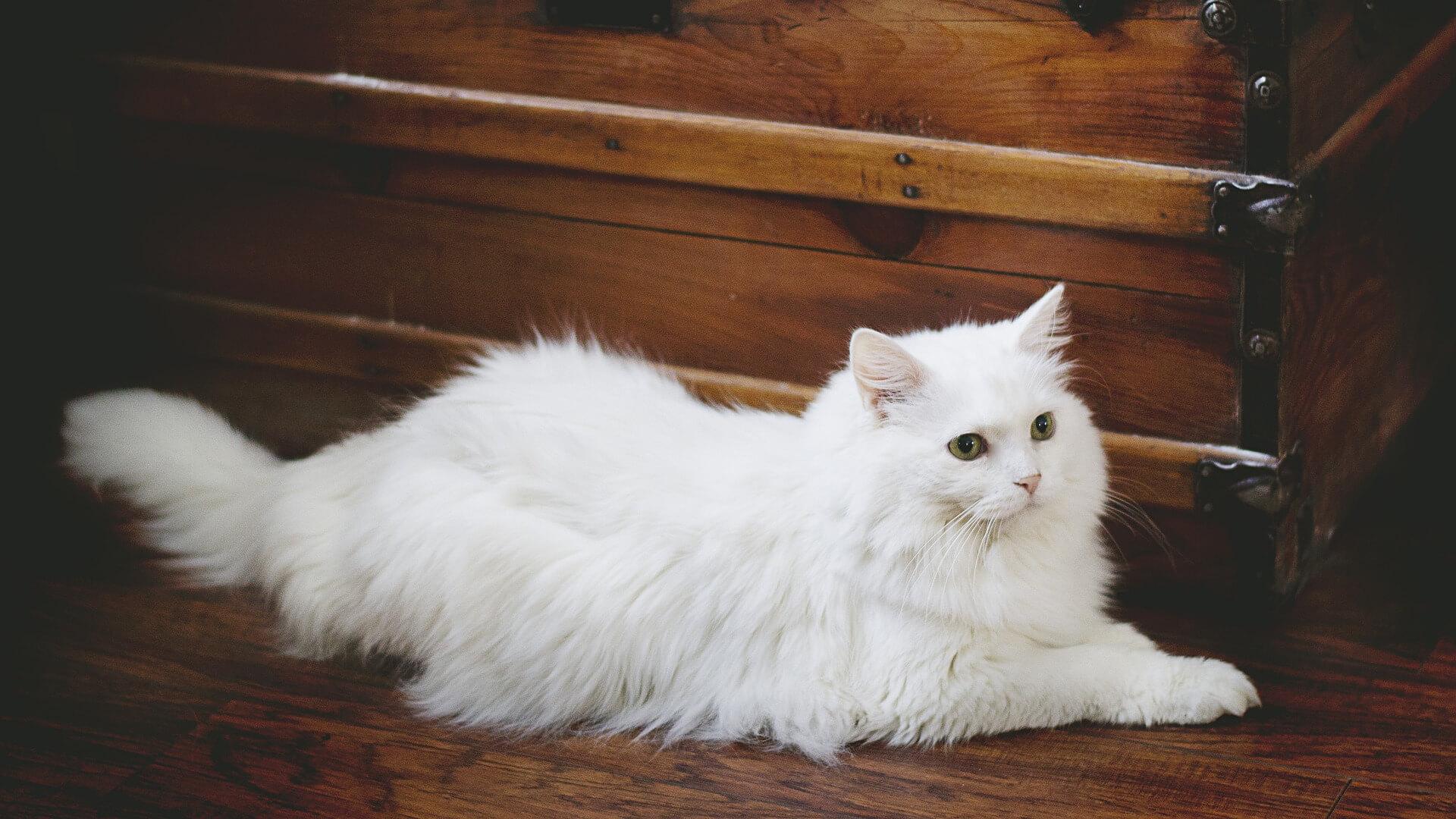 Péče o kočičí srst