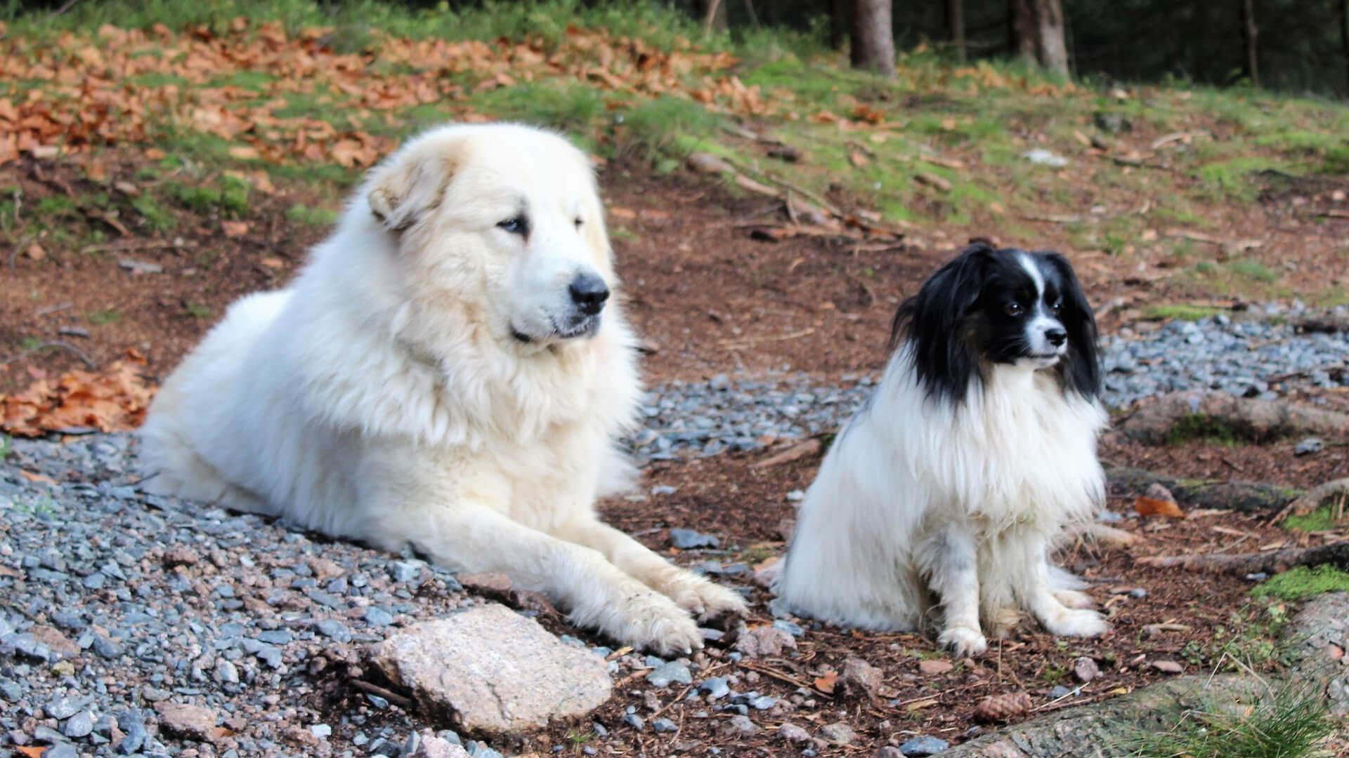 výběr psího plemene