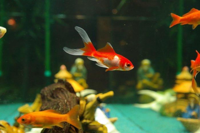Ryba - akvárium