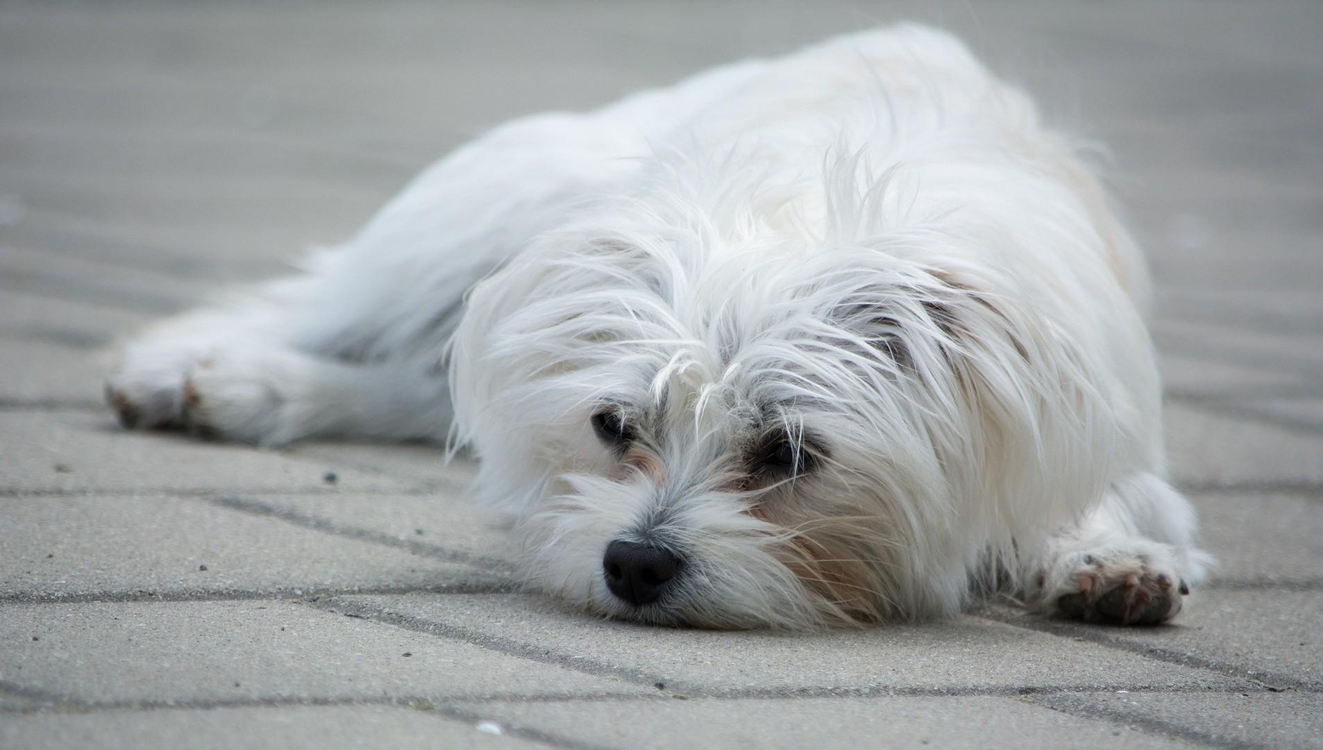 Psi mohou nastydnout