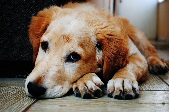 Pes s onemocněním pohybového aparátu