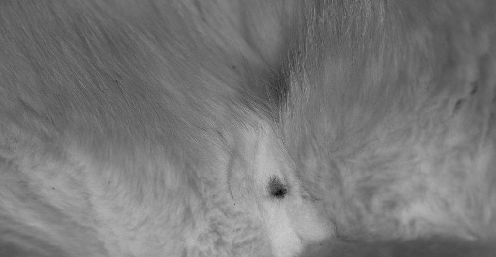 Kastrace koček