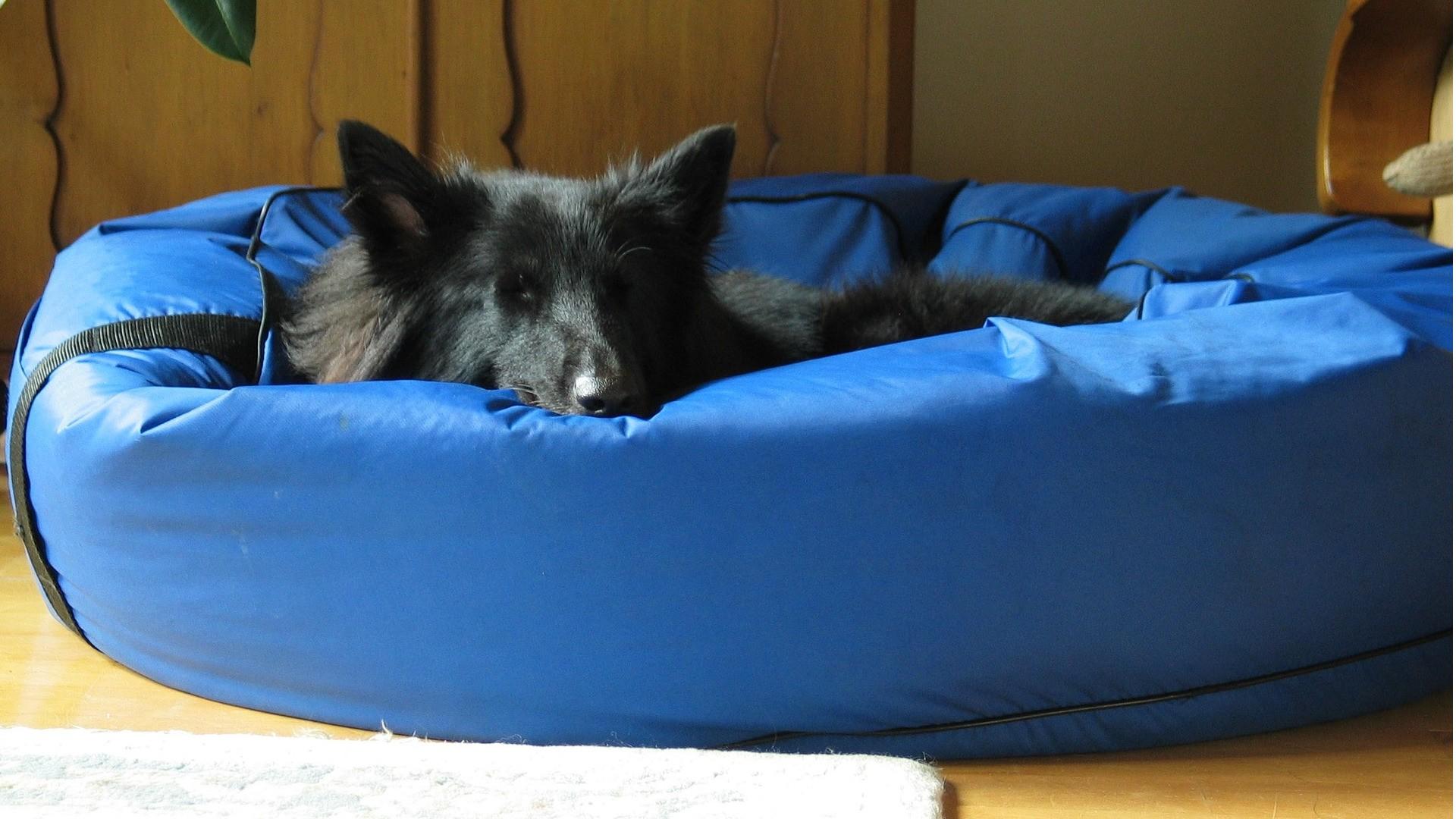 Pelíšek pro psy
