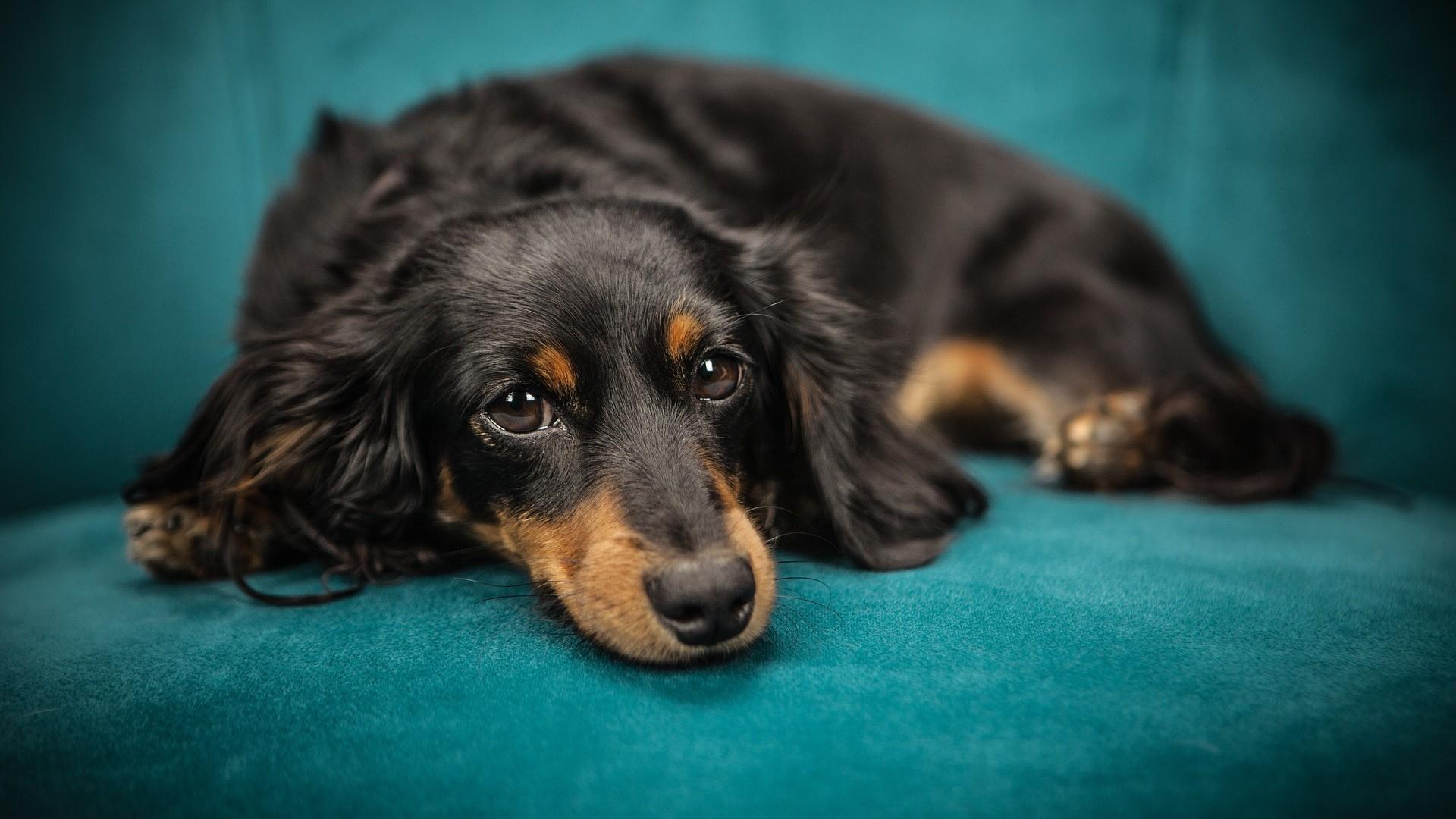 Ochrana psů před parazity