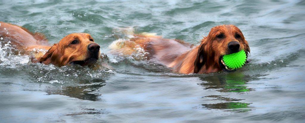 Plavající psi