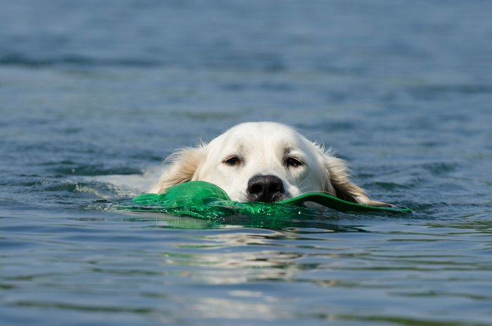 Pes ve vodě