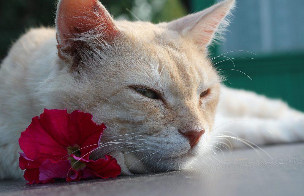 Kočka s květem