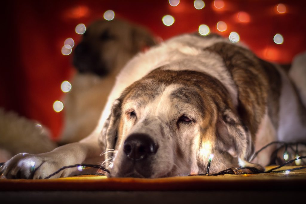 Vánoce a pes 2