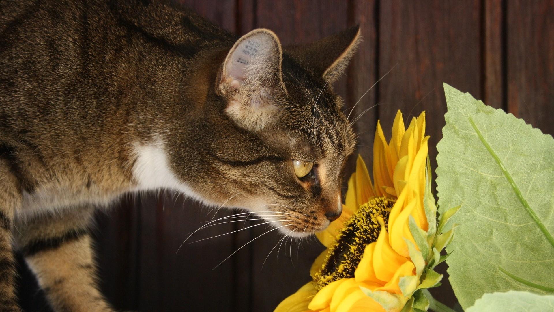 Kočka a pokojové rostliny