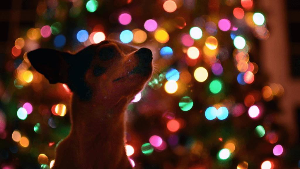 Pes na Vánoce