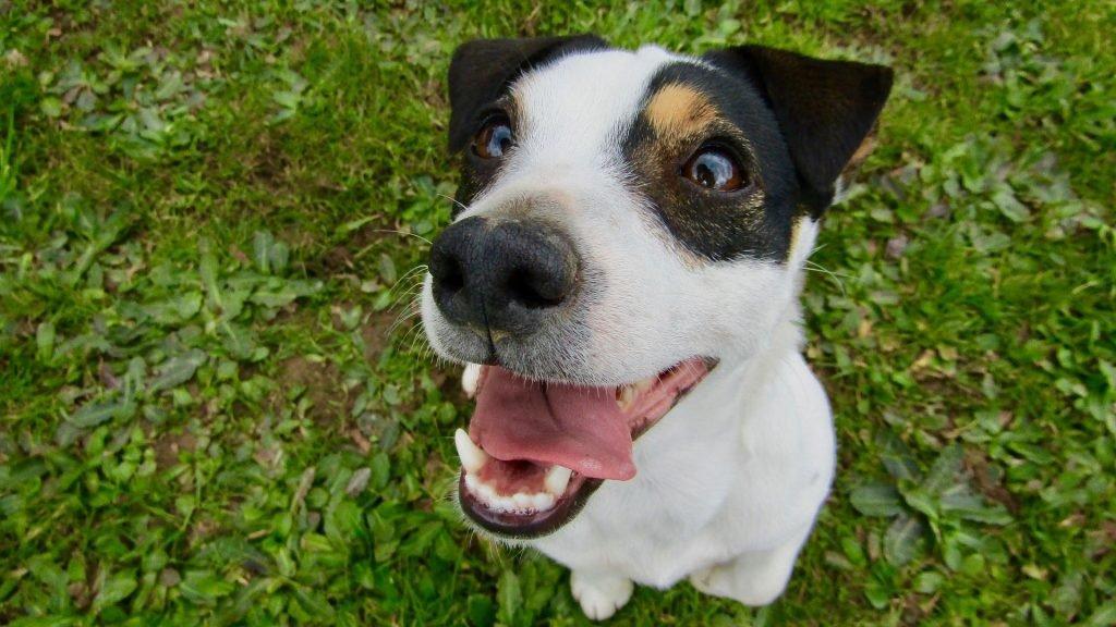 Jak eliminovat zápach z psí tlamy