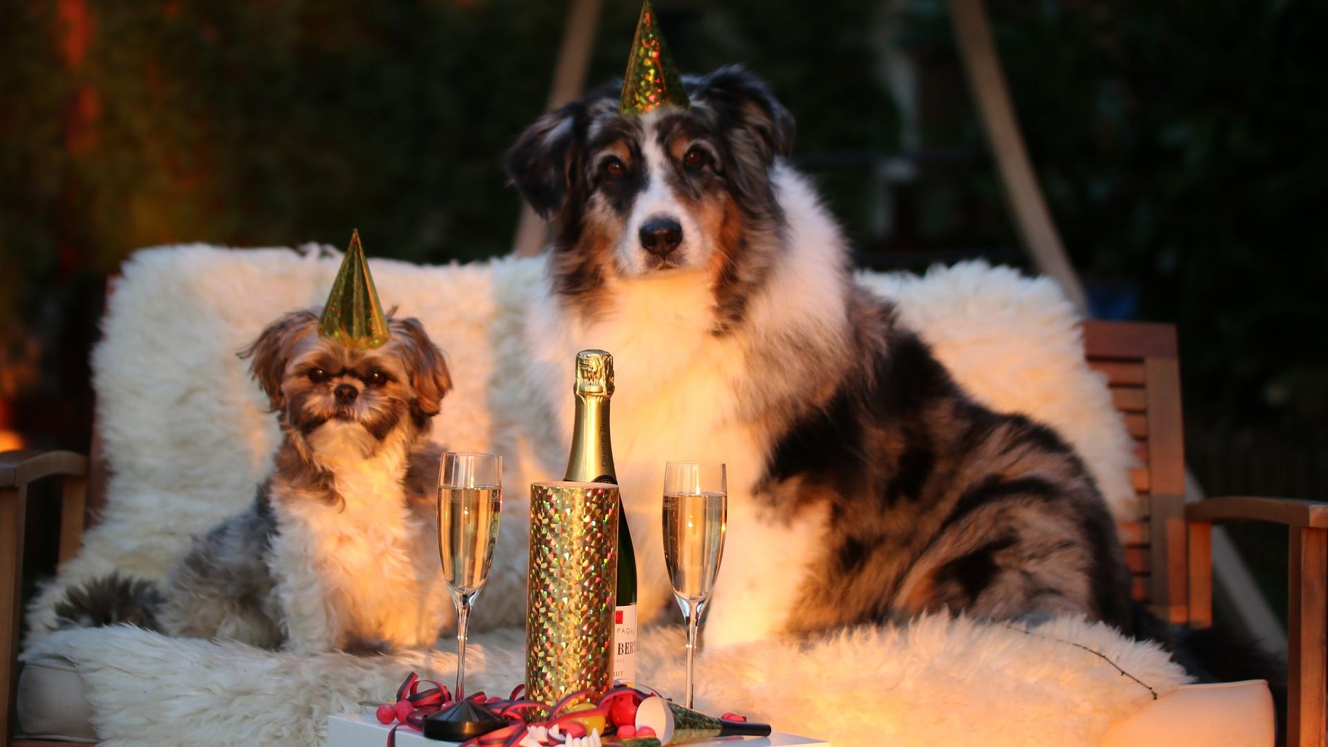 Oslava nového roku se psem