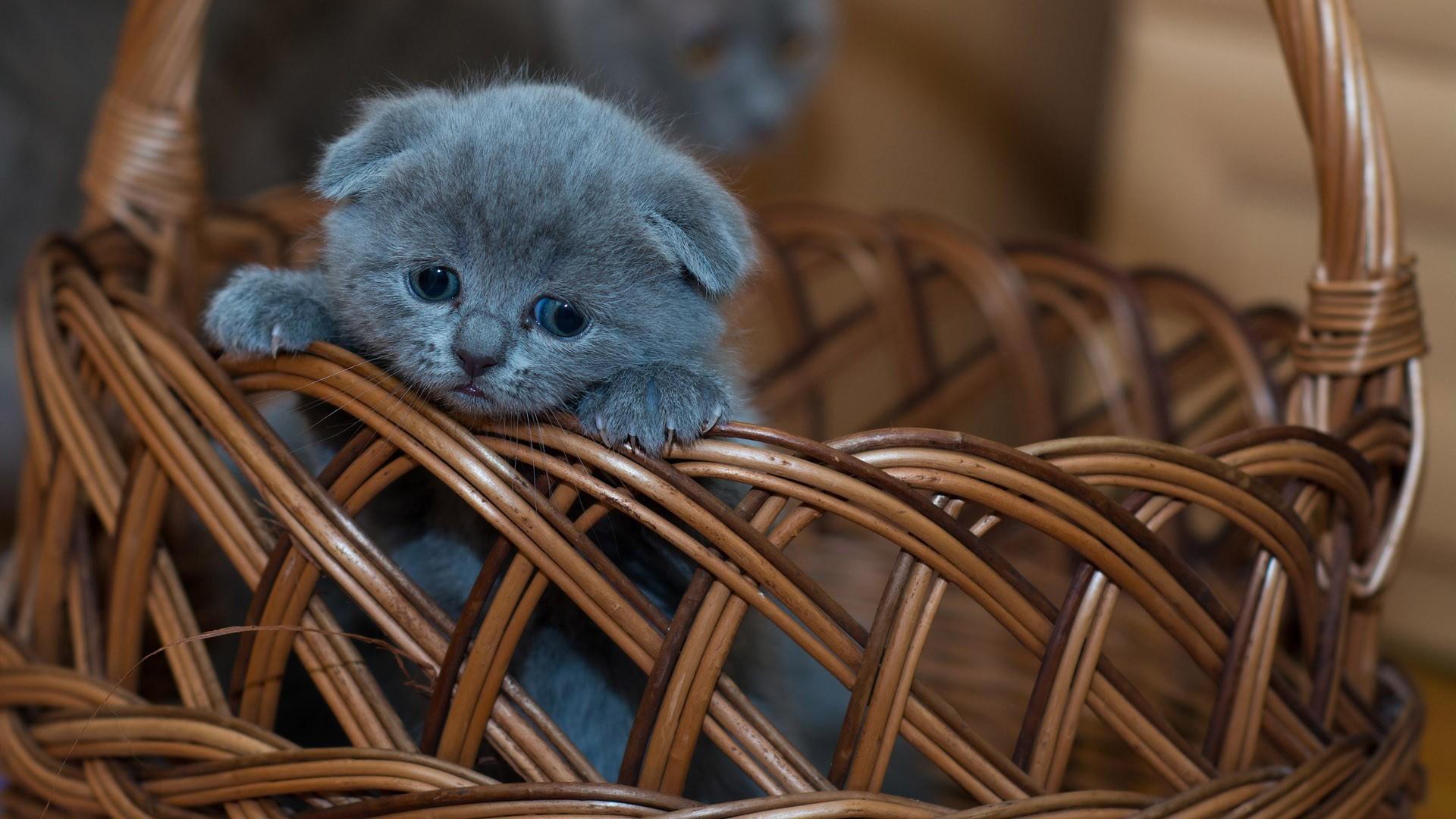 Kotě se smutným výrazem v košíku