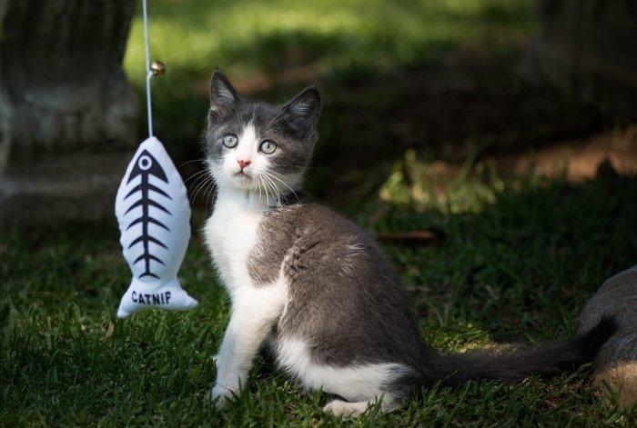 Kotě s hračkou – rybička na provázku
