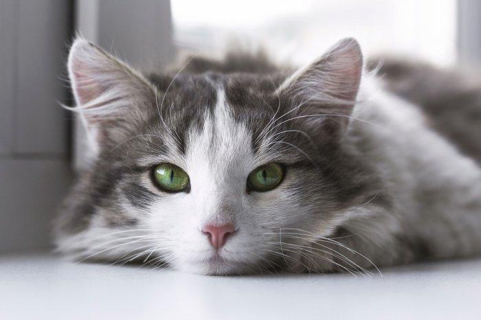 Mějte s kočičkou trpělivost, až bude chtít z přepravky, vyleze