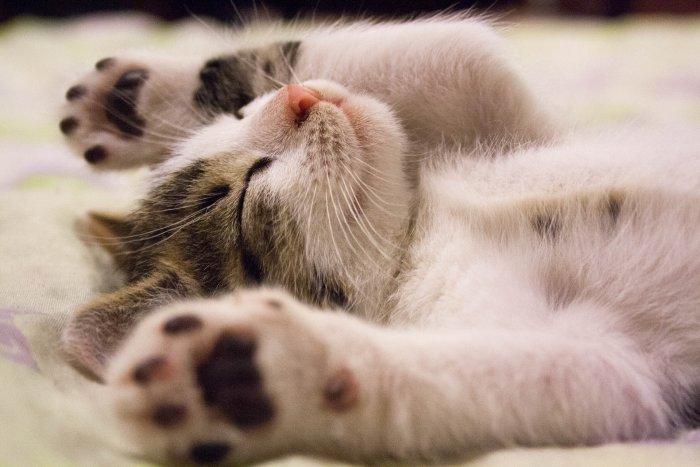 Kotě ležící na zádech