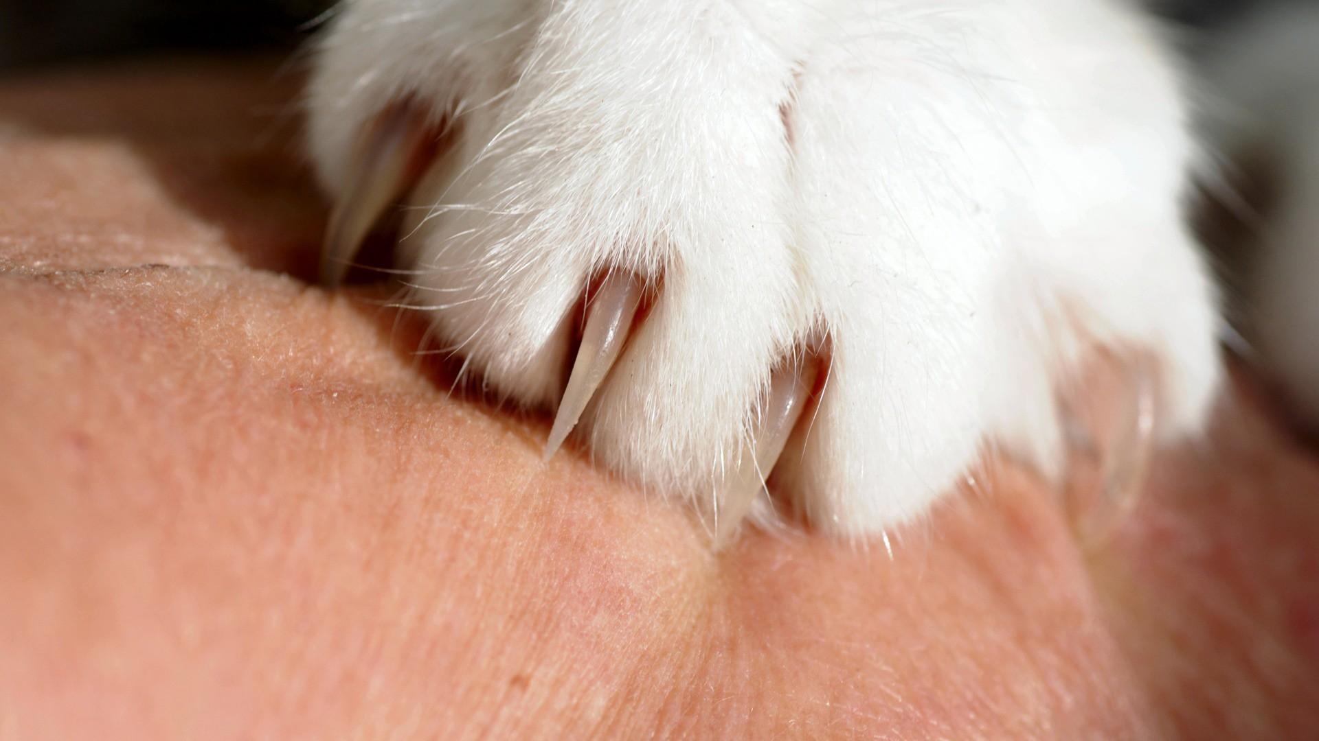 Kočičí drápy