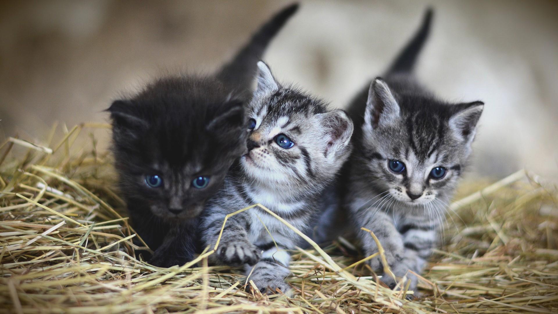 Koťata ve slámě
