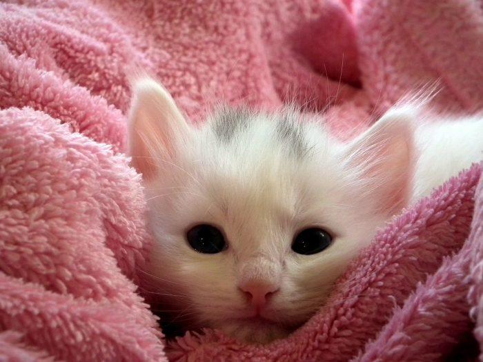 Kotě v ručníku