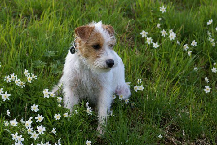 Pes u kvetoucích rostlin