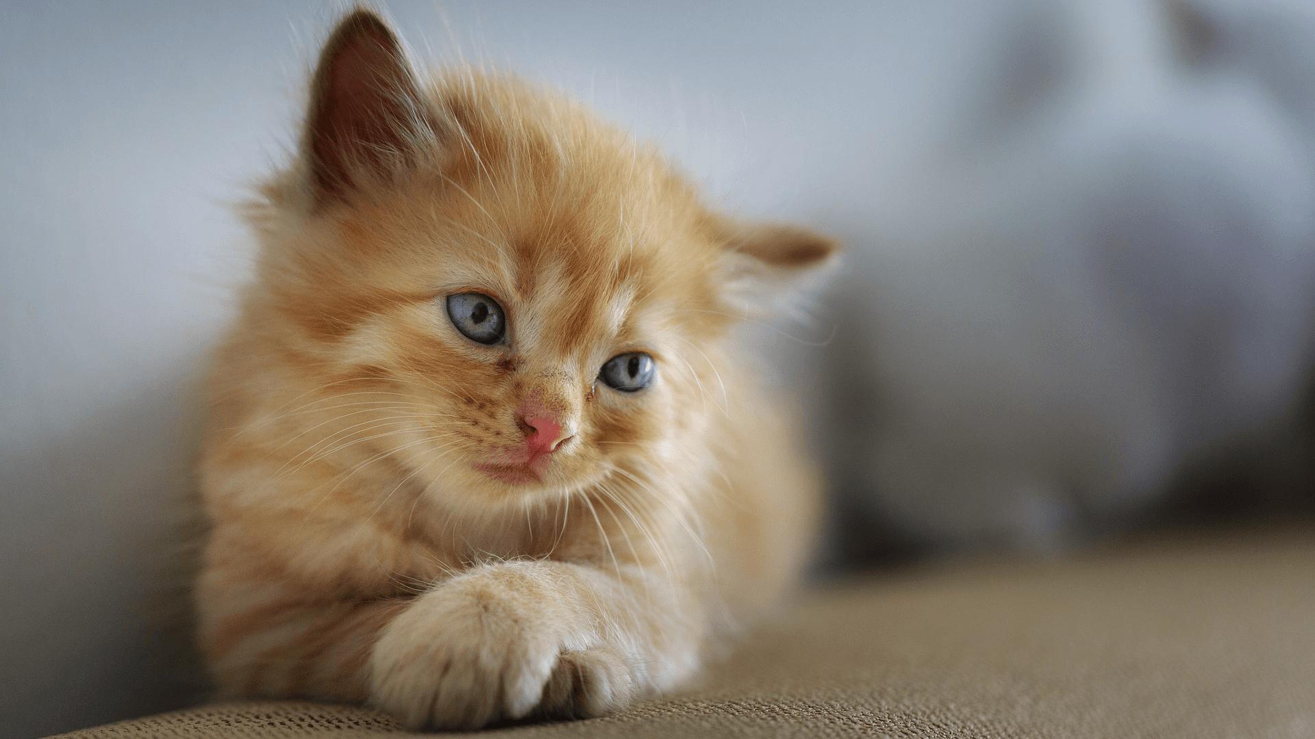 Smutné kotě