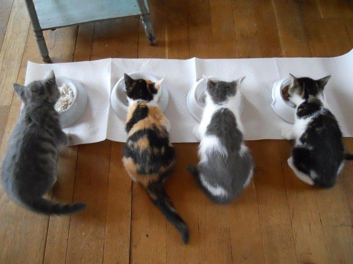 Krmení koťat