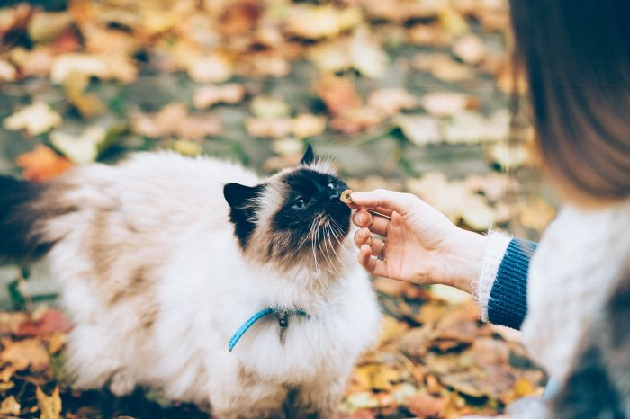 Krmení kočky