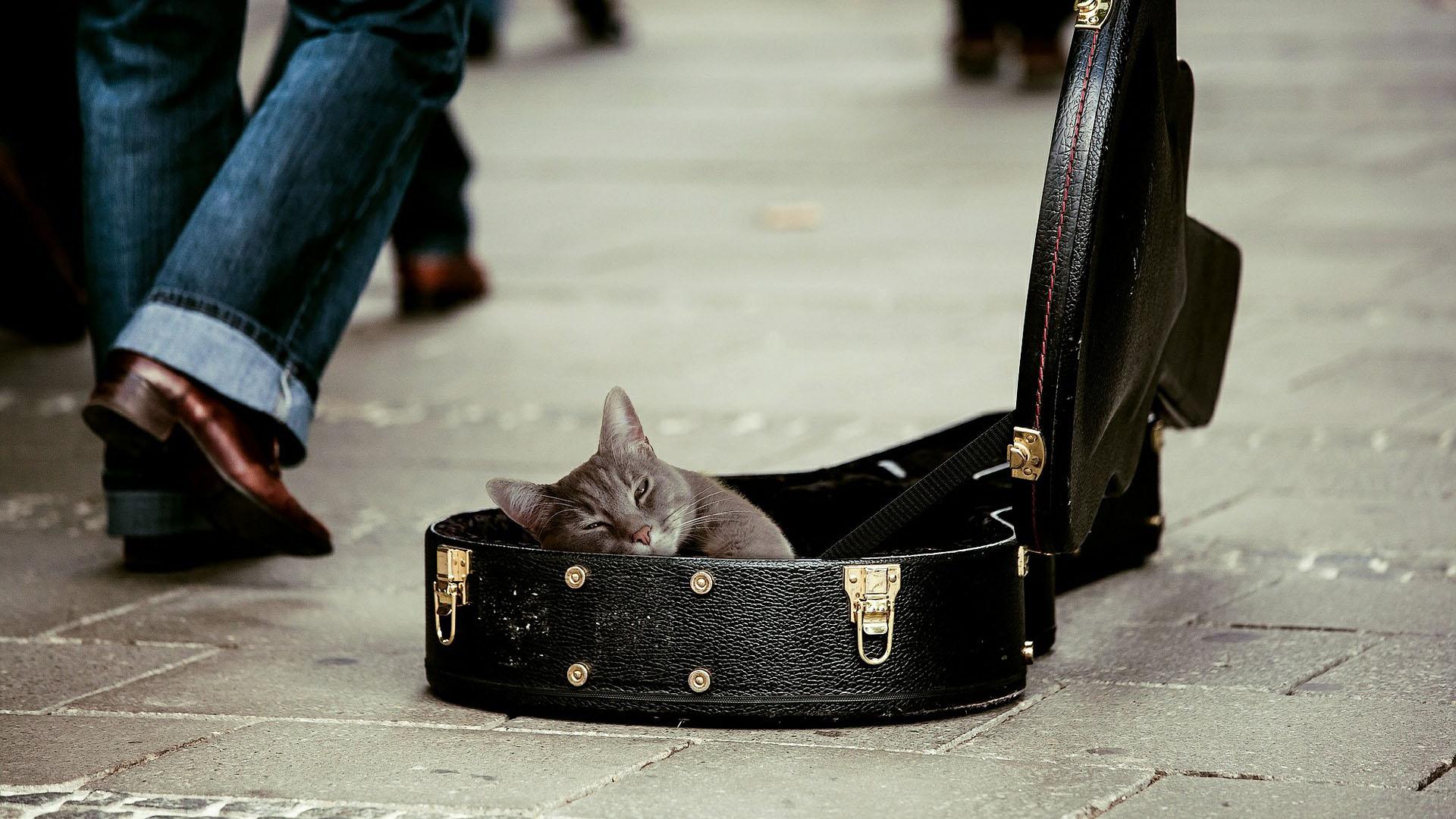 Chcete si pořídit domácí kočku? Spočítejte si náklady