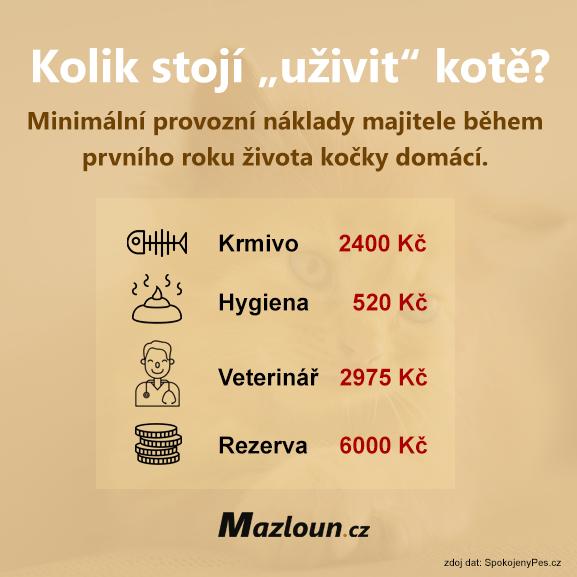 Kolik stojí uživit kotě.