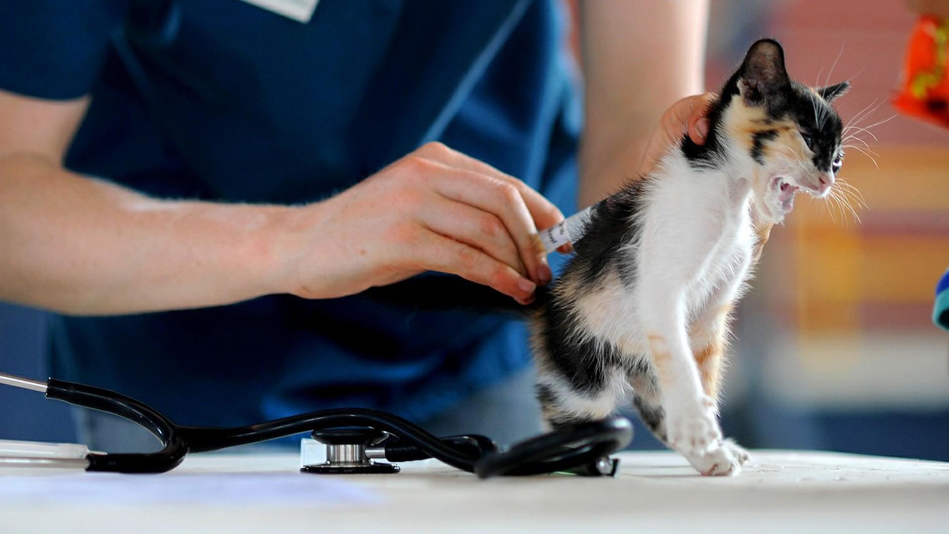 Kočka na očkování, veterinář