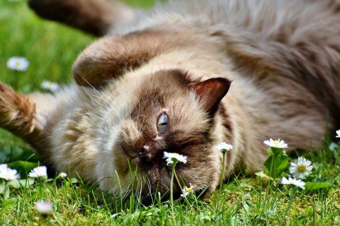 Kočka ležící v trávě