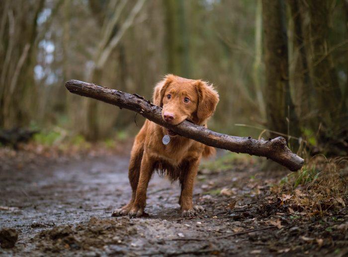 Pes s klackem
