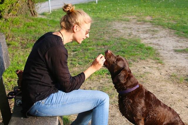 Odměna pro psa