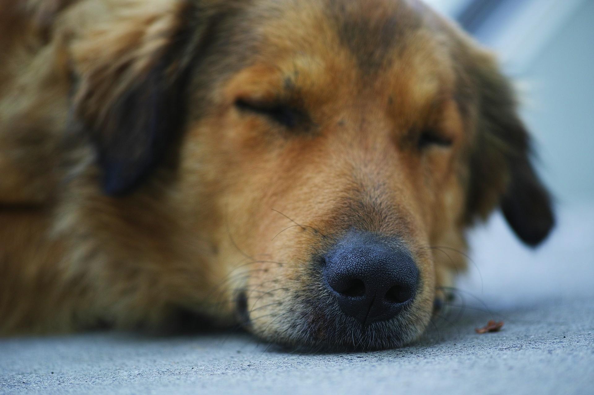 Epilepsie u psa