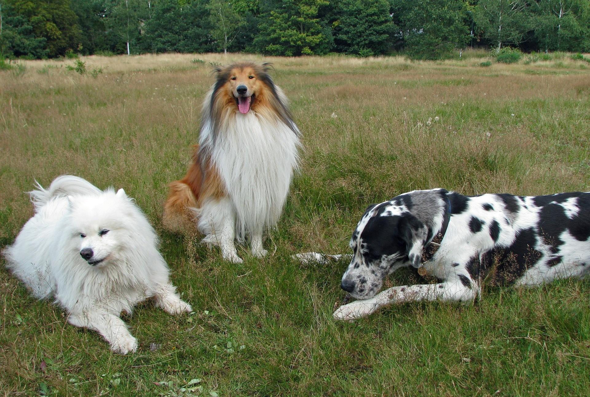 Jaké plemeno psa zvolit