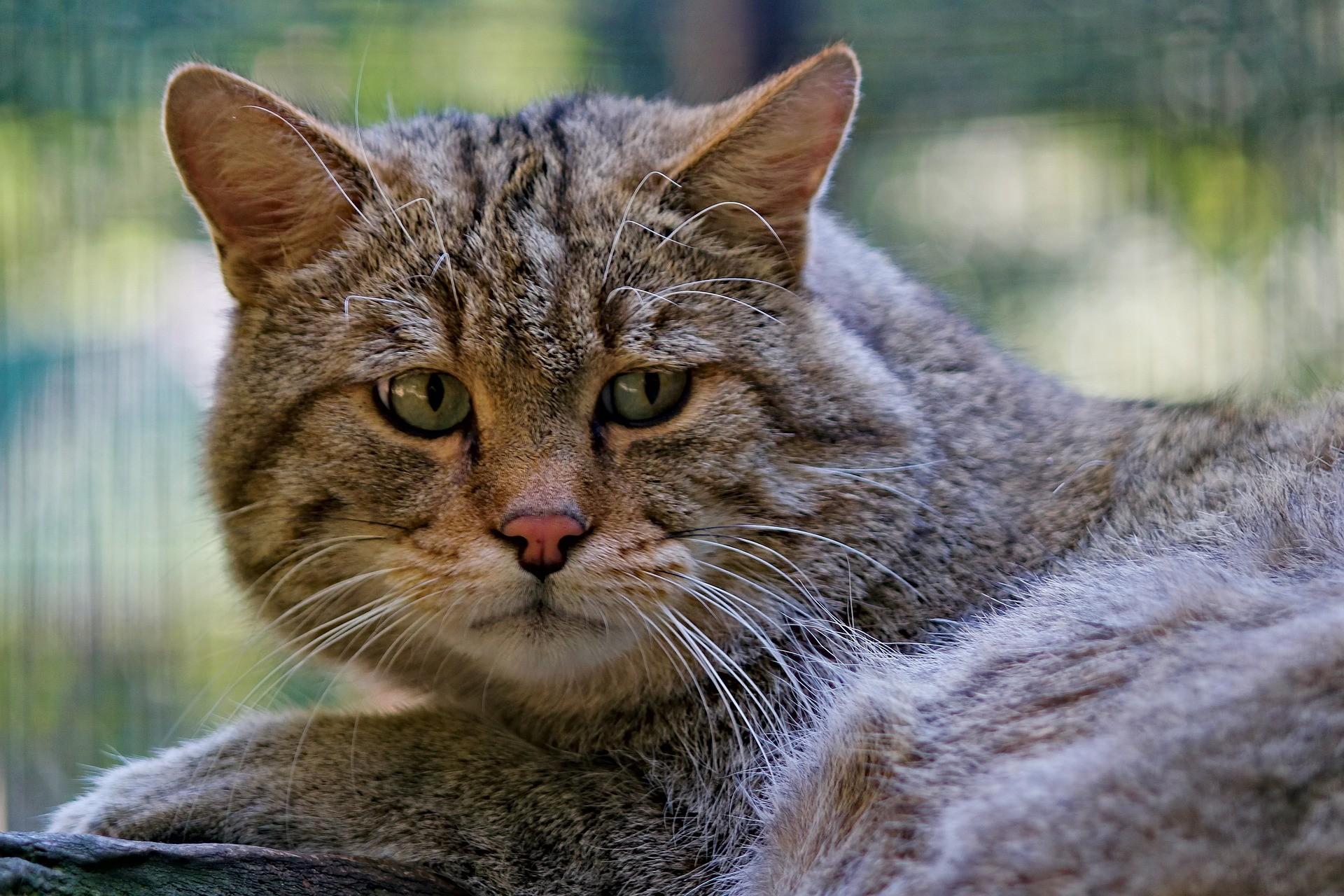 Otrava u kočky